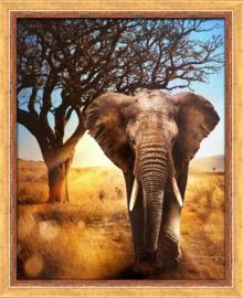 AFRICAN ELEPHANT AZ-1783