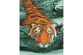 TIGER WATERS WD2413  38 x 48 cm