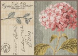 Home and Garden -  Hortensia