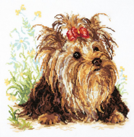 DOG: YORKSHIRE TERRIER