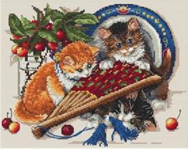 CAT: KITTENS & CHERRIES
