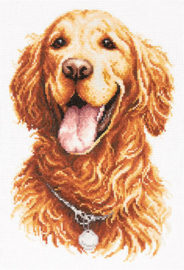 DOG: GOLDEN RETRIEVER