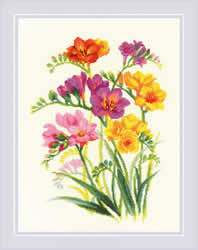 BORDUURPAKKET FRAGRANT FREESIA - RIOLIS