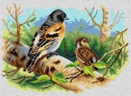 Voorbedrukt stramien After Archibald Thorburn - SPRING BIRDS - ORCHIDEA 30 x 40