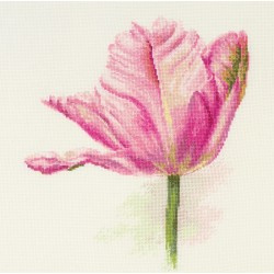 TULIPS. LIGHT PINK - ALISA