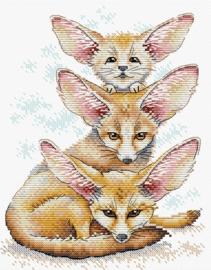 FENNEC FOX FAMILY - MP-STUDIA