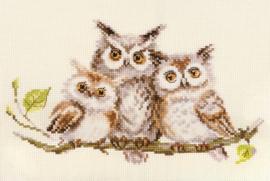 OWLS S0-210 - ALISA