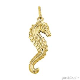 Gouden zeepaard