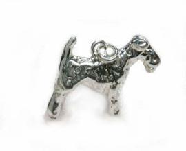 Zilveren Fox terrier ruwhaar