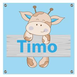 Spandoek Timo