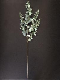 BOB - Decoratie Eucalyptus tak voor hoge vaas 120 cm