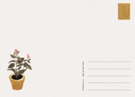Postkaart Tent - Liekeland