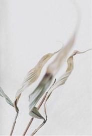 A4 Artprint Cycle - Floortje Louise