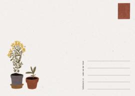 Postkaart Struinen - Liekeland
