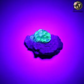 Hyaliet Opaal op Matrix nr. 11