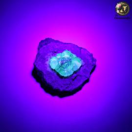 Hyaliet Opaal op Matrix nr. 17