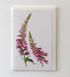 Card Foxglove