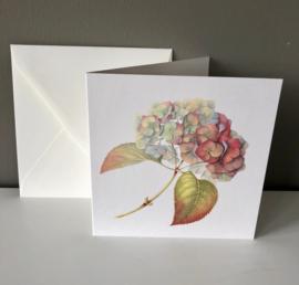Card 'Hydrangea Autumn'