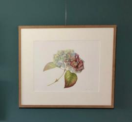 'Hydrangea Autumn'