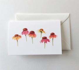 Card Sunhats