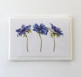 Card Anemone 'Blu Mistral'