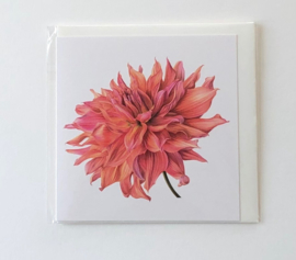 Card Dahlia 'Belle of Barmera'