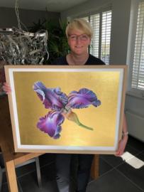 Iris Germanica 'Baltic Star' XL Gold