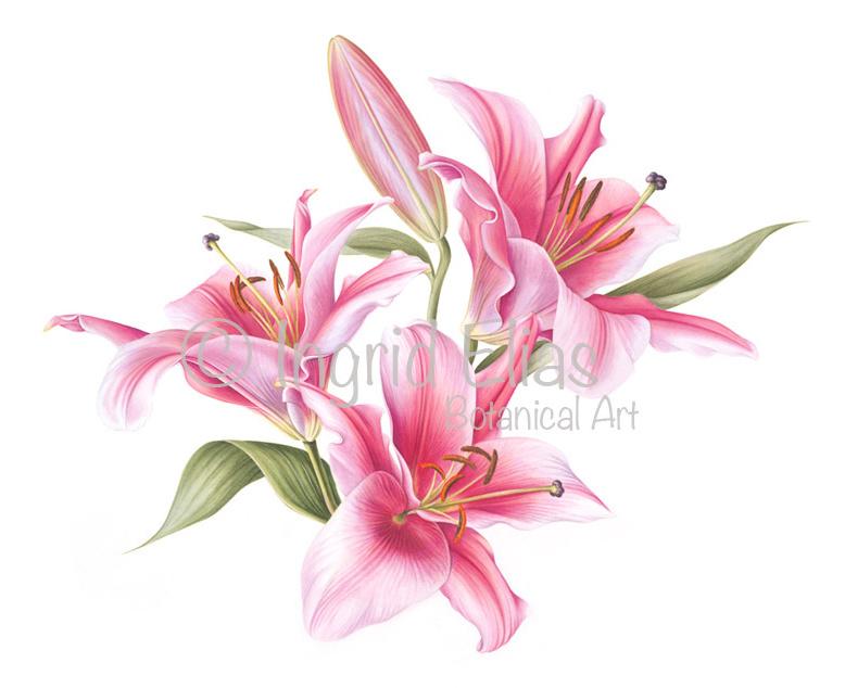 Card 'Pink ladies'
