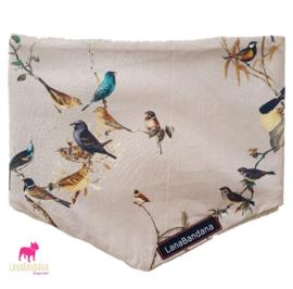 Birds   Beige