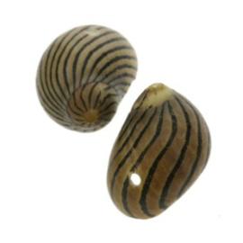 zakje schelpjes naturel 20 x 12 mm p/20
