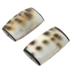 schelp kraal 28x15mm tiger cowrie square p/6