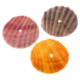 kraal schelp pictin shell rond 25mm assortie verpakt p/30