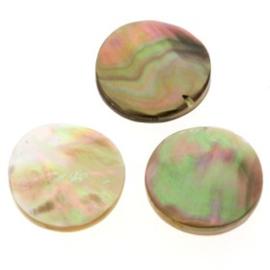 kraal schelp brownlip shell polished 20 mm p/10