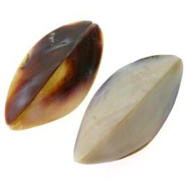 schelp kraal 40 x 15 mm violet oyster 4 zijdig p/4