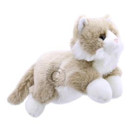 Beige/witte kat