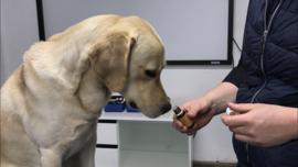 (M7) Essentiële oliën bij honden, 16 juli 2021