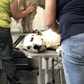 Inschrijven module 3 intuïtieve massage voor honden, mei 2022