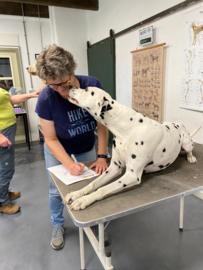 Inschrijven module 2 integratieve massage voor honden, januari 2022