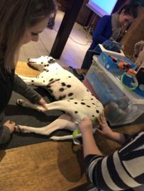 Inschrijven cursus functional en medical taping voor honden, september 2021