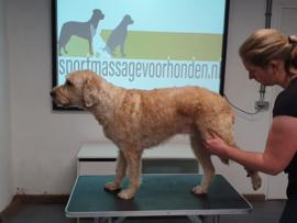 Inschrijven module 1 sportmassage voor honden