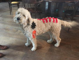 Functional- en medical taping voor honden