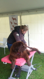 Module 1 Introductie sportmassage voor honden