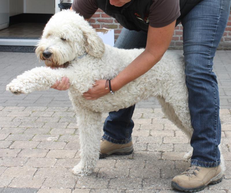 M 1-6 Integratieve massage voor honden