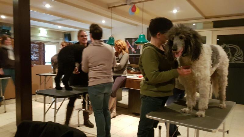 M 1-3 Sportmassage voor honden