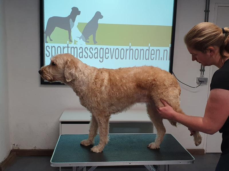 VERSNELD TRAJECT, module 1 sportmassage voor honden mei/juni 2021