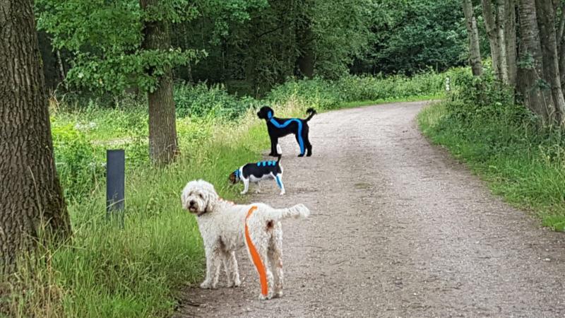 Opleiding functional taping voor honden