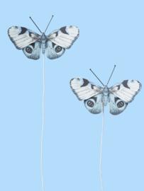 Vlinders Met Wikkeldraadje