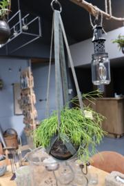 glazen planthanger