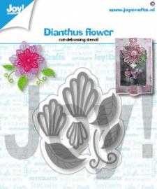 Joy Stansmal -Dianthus bloem