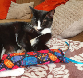 Snuffelzakje gym  Space cat met lintjes (gevuld met catnip én valeriaan)